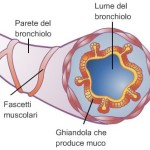 Bronchiolo