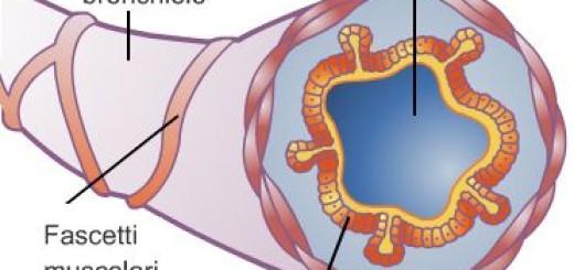 Bronchiolo e Asma