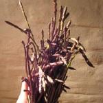 Asparagi Selvatici (clicka per ingrandire)