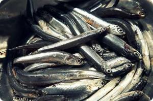 Pesce Azzurro e Acidi Grassi