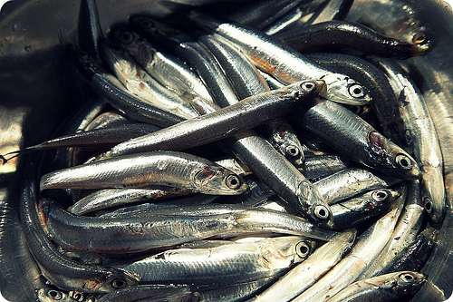 Alici: Il pesce azzurro  ricco di Omega-6