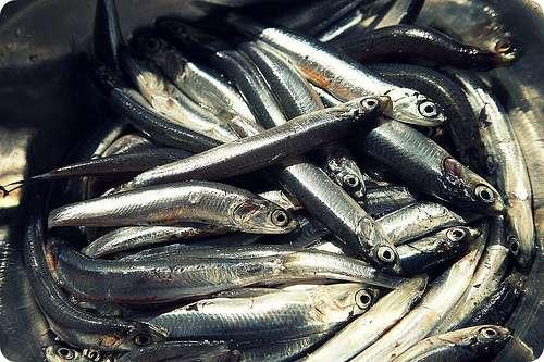 Alici: Il pesce azzurro è ricco di Omega-6